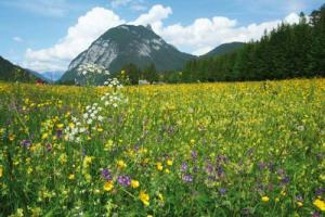 Ahrnspitz mountain showing up colorful flower meadow with variety of vegetation
